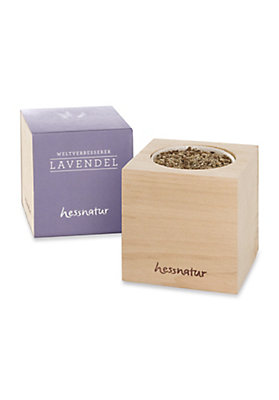 - Pflanzwürfel Lavendel