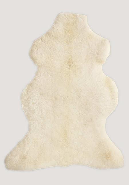 Lambskin Mimosa